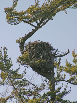 Dan Eggert, eagle nest