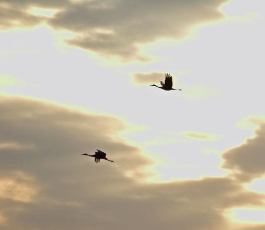 Dan Eggert, sandhill cranes, Door County