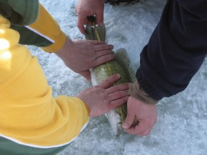dclv05i04-outside-in-door1-fish-on-ice