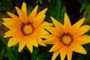 dclv07i02-habitats-flower3