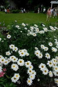 dclv07i02-habitats-flower5