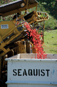 dclv07i03-history-seaquist-cherry-bin