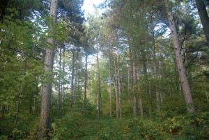 dclv08i03-door-to-nature-mixed-forest-RLukes