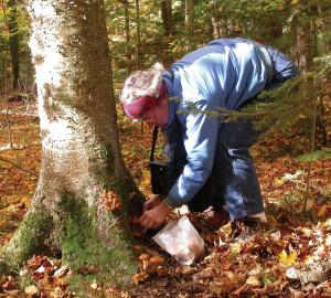 dclv09i03-door-to-nature-Char-collecting-Honey-Caps-RLukes