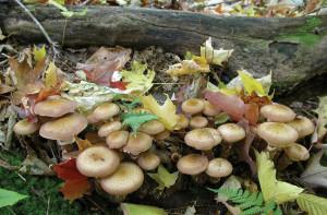 dclv09i03-door-to-nature-honeycaps-RLukes
