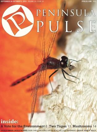 Pulse Cover v20i39 moquito