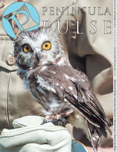 Peninsula Pulse Cover v21i35 Owl