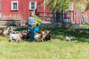 Lynne Grasse Goats ellison bay