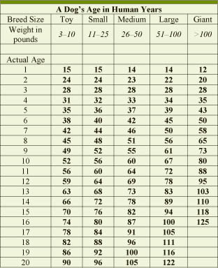 How to Figure out Dog Years: 10 Steps (with Pictures ...