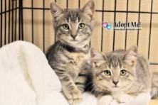 dchs kittens