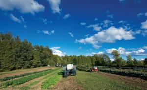 Len Villano, farm