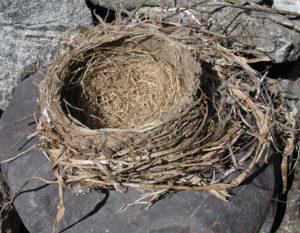 #9-DCL-2-16-Robin's Nest-1Cr