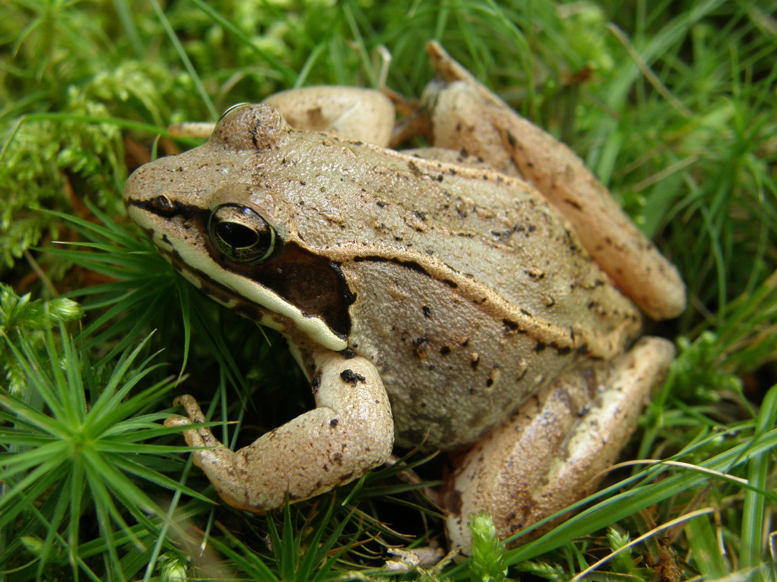 Frog Listeners Needed for Wisconsin Frog and Toad Survey ...