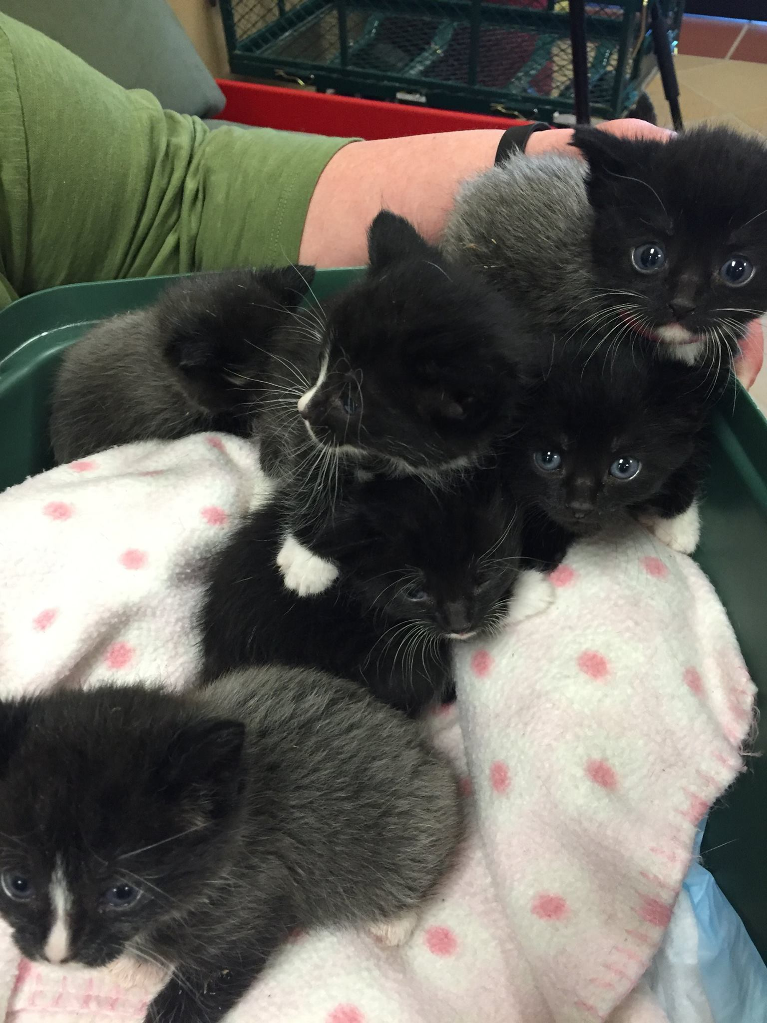 Everyone Invited to Door County Humane Society s Annual Kitten