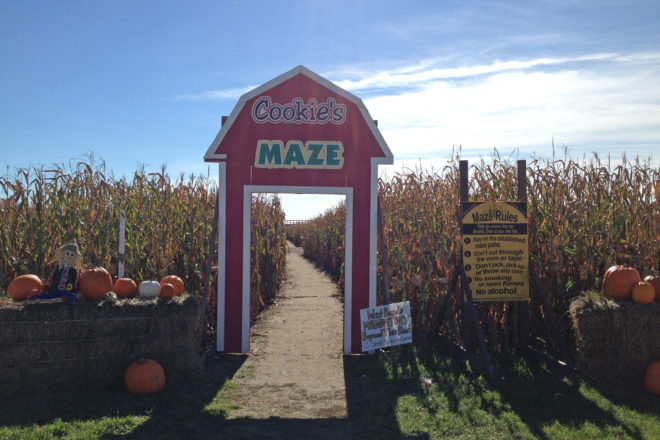 Get Lost...at Schopf's Corn Maze