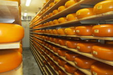 Marieke Gouda aging in the cave at Holland's Family Cheese, Thorp, Wis. Submitted.