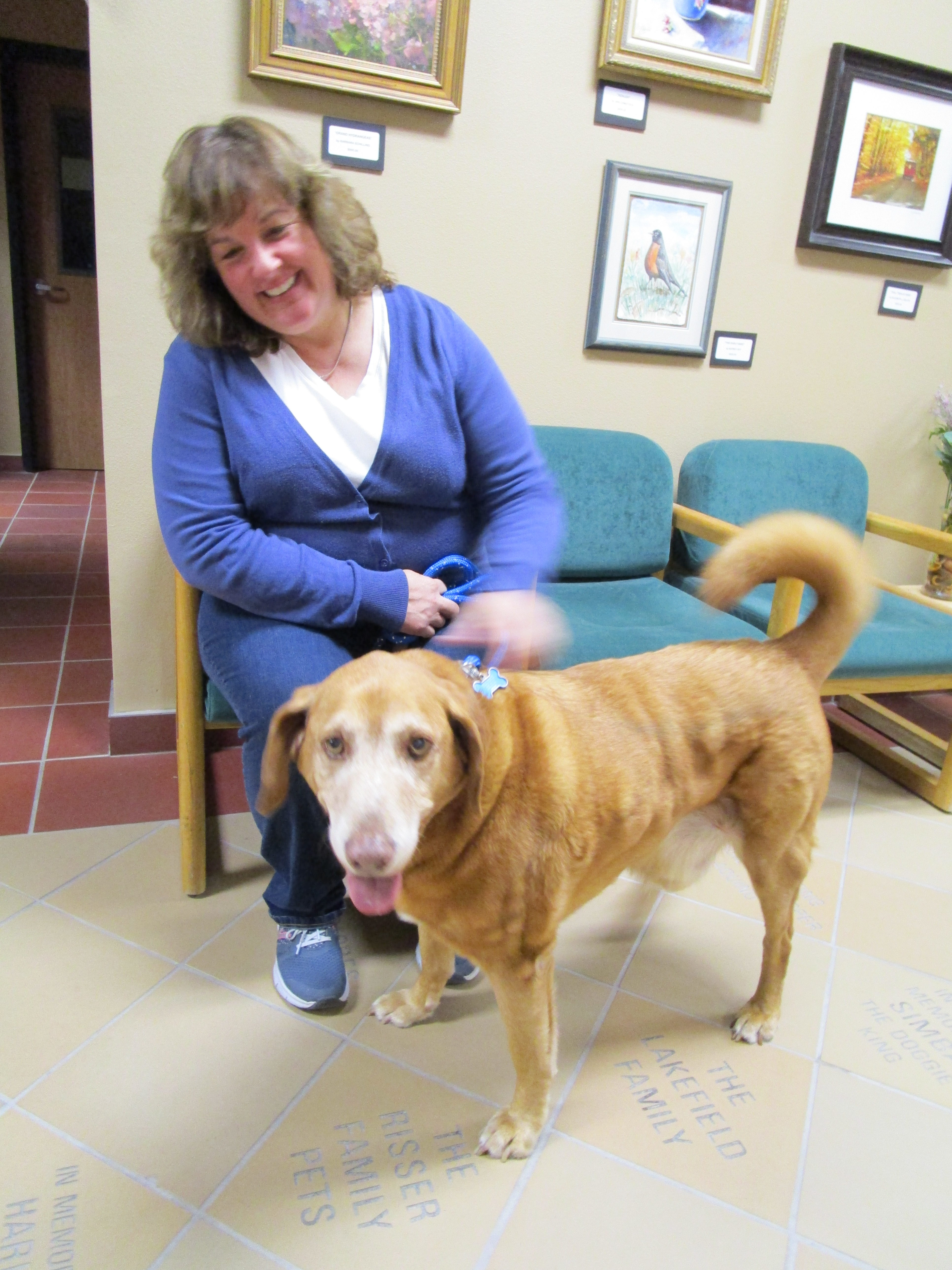 essay therapy dogs The monday life intro  the pet therapy dog,  a pet visitation program designed for therapeutic interaction between trained dogs and pediatric patients,.