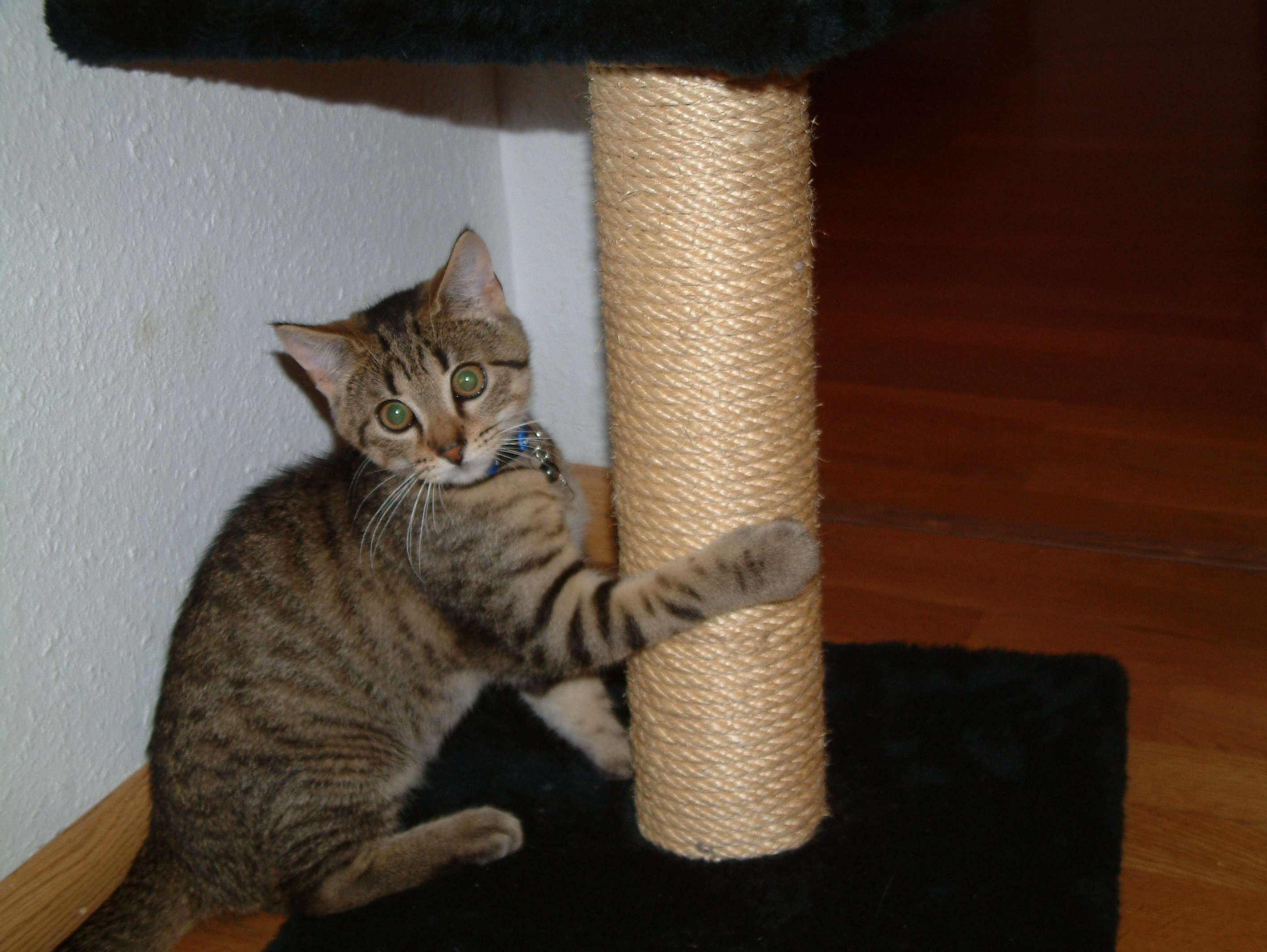 how to make a cat scratcher post