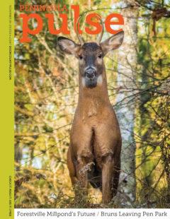 web-nov-18-cover