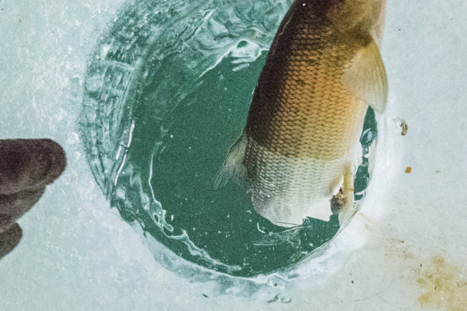 DNR Holding Winter Whitefish Guide Reporting Meeting