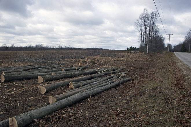 55 Acres of Trees Cleared at Ephraim-Gibraltar Airport