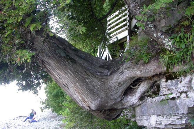 Roy & Charlotte Lukes: Niagara Escarpment Lessons