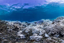 Okinawa Coral