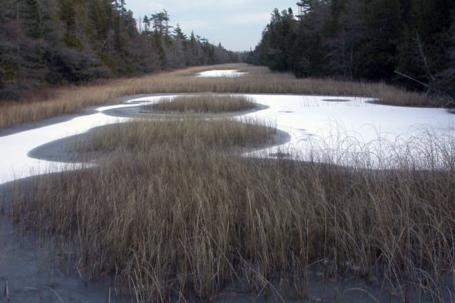 guarding our ecosystems marshlands and wetlands essay Without human activities the biodiversity of semi-natural ecosystems would more  than  related essays  guarding our ecosystems- marshlands and wetlands.