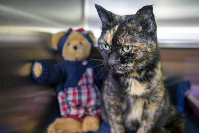 Door County Humane Society, Featured Pet