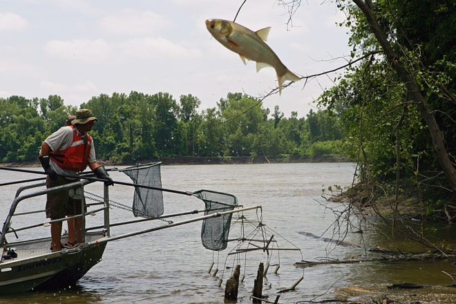 These Terrorists Must Be Stopped: President Trump, Release the Asian Carp Report