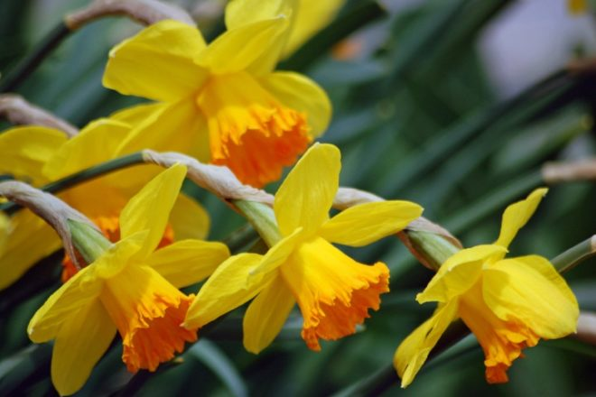 Here Comes Spring: Quick Facts About the Vernal Equinox