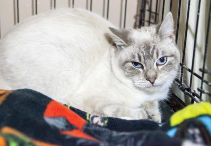William. Door County Humane Society featured pet.