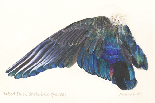 Celebrating Wings in Watercolor