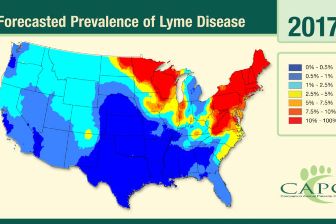 Preventing Lyme Disease with Tips for Ticks