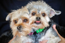 Baby and JoJo. Featured Pet. Door County Humane Society.