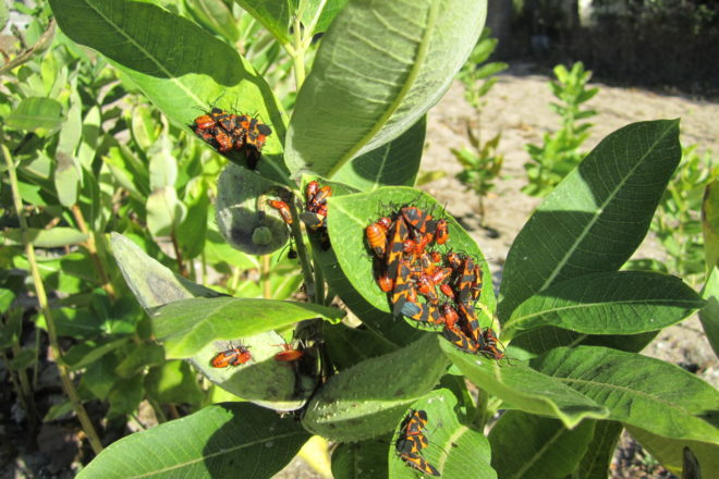 Integrated Approach to Pest Management