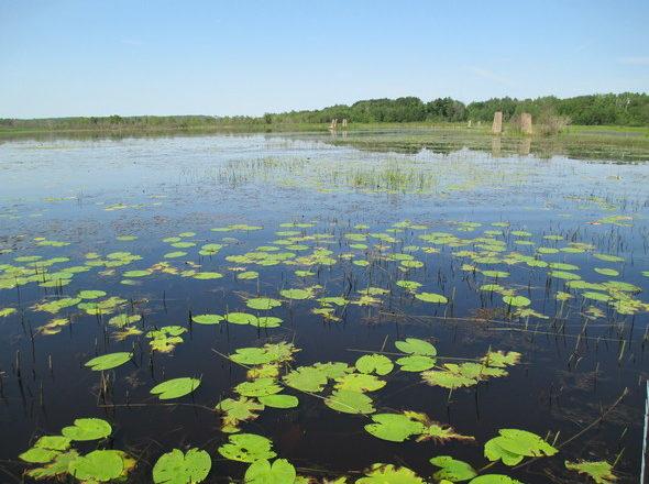 St. Louis River Estuary Makes A Comeback
