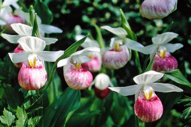 Door to Nature: Native Wild Orchids