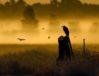 Great Blue Heron by John Van Den Brandt