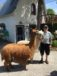 Summerwind Alpaca