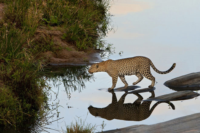 Behind the Lens of Wildlife Photographer John Van Den Brandt