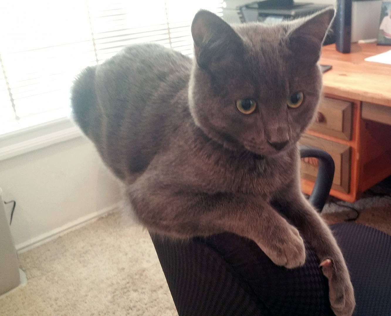 Pet Talk Hypoallergenic Cat May Be the Answer Door County Pulse