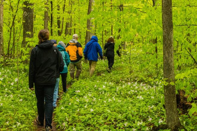 A Few Walks In the Newport Wilderness