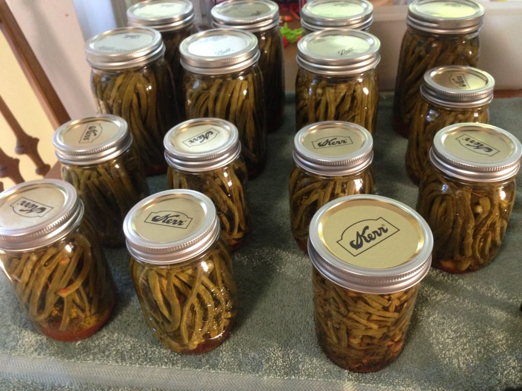 spiced dilly beans. Angela Sherman.