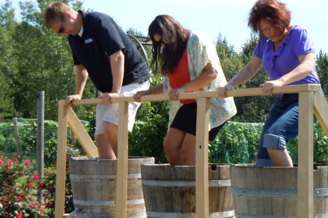 Grape Stomp, Food Vendors Highlight Parallel 44 Harvest Fest
