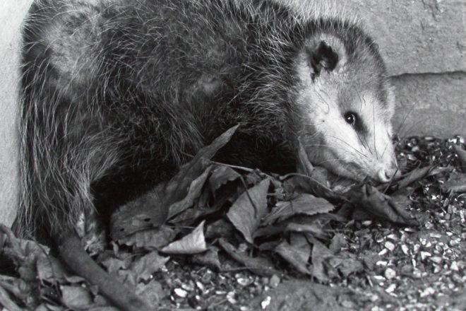 Door to Nature: Playing Possum