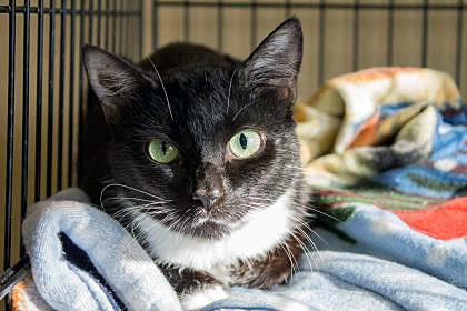 Featured Pet: Mitzi