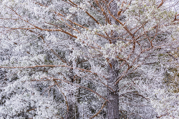 Editor's Note: Welcoming Winter