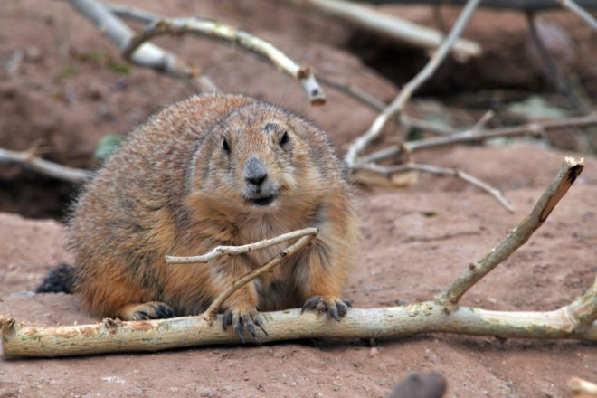 commentary every day is now groundhog day in wisconsin door