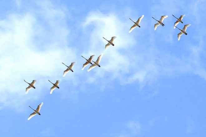 Strong Showing of Migratory Birds